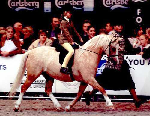 Bryndefaid Patsy pictured winning the Supreme M&M Mini Championship at HOYS 2002